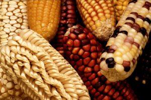 Oct 2005 : questions sur les OGM en vue de la votation