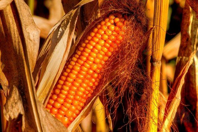 Le Parlement européen s'oppose à l'importation de nouveaux OGM