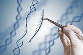 Remise en cause des tests menés par Bruxelles sur les OGM – AFP- 8 juillet 2009