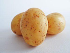 Une nouvelle pomme de terre OGM mal évaluée