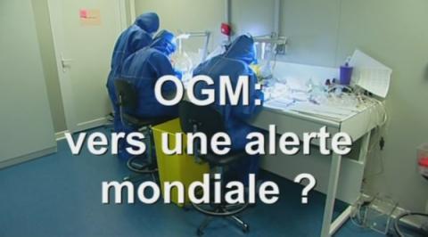 OGM : vers une alerte mondiale ?