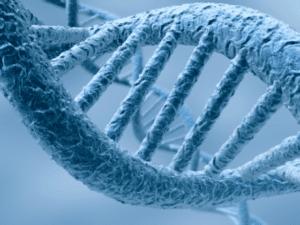 Manques et améliorations possibles en droit européen sur l'encadrement des OGM – Dr Panoff et Baudin-Maurin
