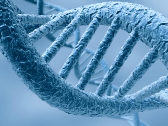 Les transferts génétiques horizontaux