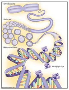 """Une étude démontre des effets """"épigénétiques"""" sur l'ADN d'un polluant à faible dose au stade périnatal – Dr Nora Benachour"""