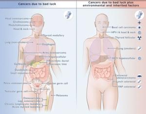 Commentaire du Pr. Gilles-Eric Séralini sur«Le rôle du hasard réévalué dans les cancers» (Le Monde, 3 janvier 2015)