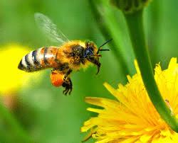 Une chercheuse toulousaine couronnée pour une étude sur les abeilles – Toulouse – AFP du 18 mars 2015