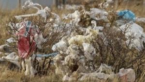 10 000 signatures pour l'interdiction de la distribution de sacs plastiques jetables à LA ROCHELLE !