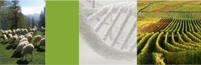 """""""Un OGM innocenté par des experts"""" – réponse au Figaro du Criigen"""