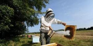Mortalité des abeilles: les députés votent l'interdiction totale des insecticides néonicotinoïdes
