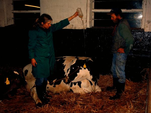 Une publication de janvier 2016 du Pr. Séralini met en évidence que le premier OGM Bt commercialisé était toxique à long terme pour les animaux d'élevage