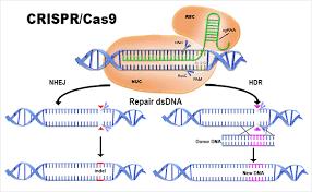 L'industrie agro-alimentaire et semencière veut exonérer les produits des nouvelles techniques de manipulation du génome (dont CRISPR/cas9)