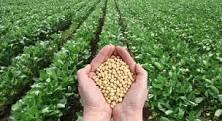 Autorisation des OGM en Europe : les cobayes c'est nous ! par Christian Vélot