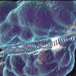 Les OGM du futur seront-ils plus imprévisibles ?
