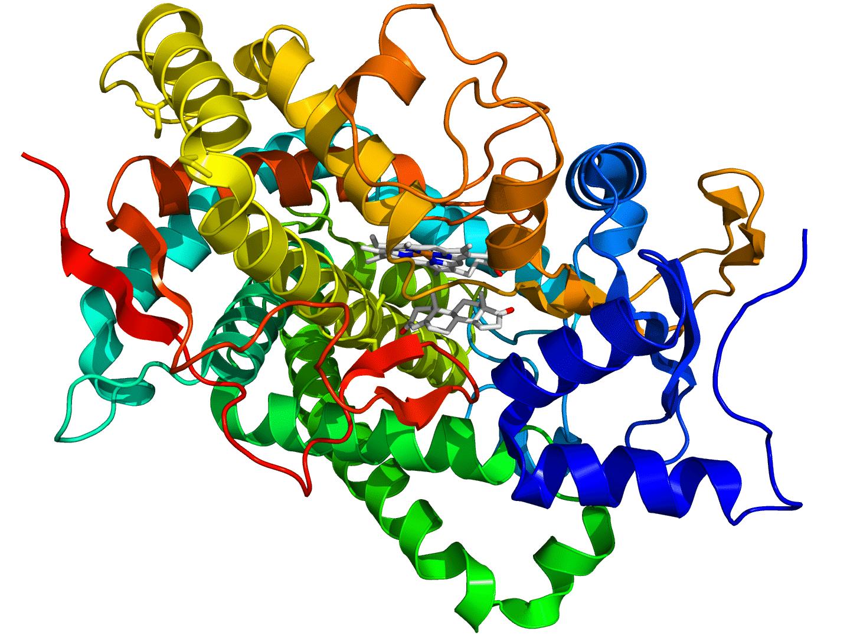 Glyphosate : un perturbateur oestrogénique seulement à haute dose