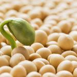 Bientôt des OGM tolérant plusieurs pesticides vendus en Europe ?
