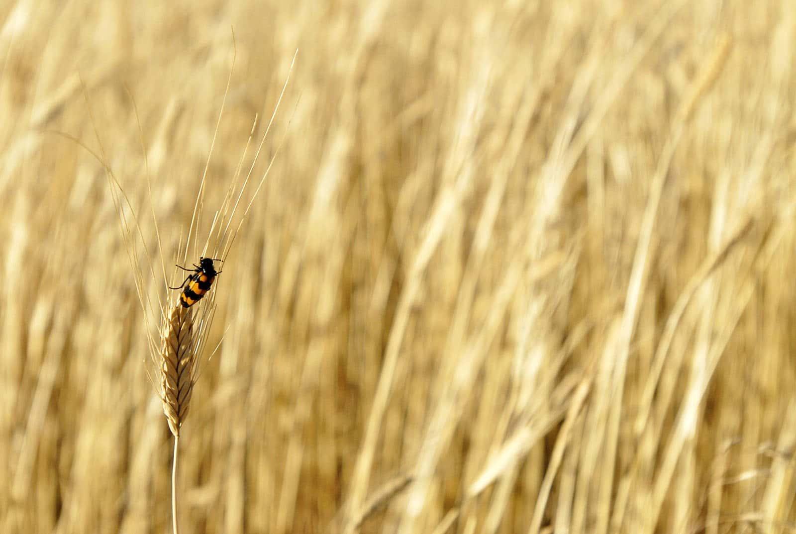 Etude Criigen : Les pesticides sont mal évalués et menacent la santé publique